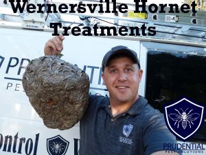 wernersville hornet treatments