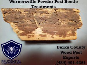 wernersville powder post beetle treatments