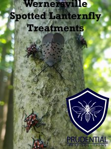 wernersville spotted lanternfly treatments