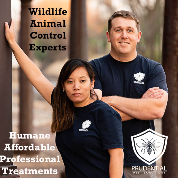 wildlife animal control experts