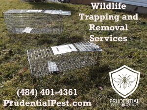 Wildlife Trapping and Removal Services