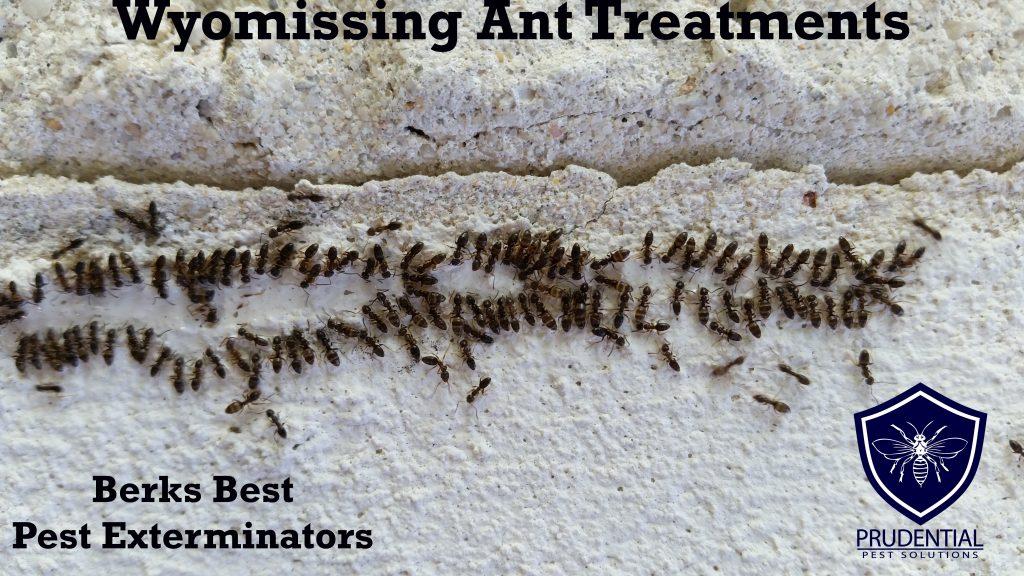 wyomissing ant treatments