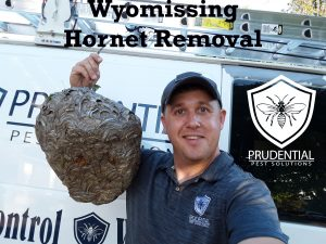 wyomissing hornet treatments and removal