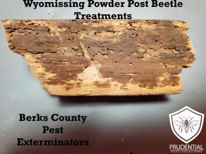 wyomissing powder post beetle treatments