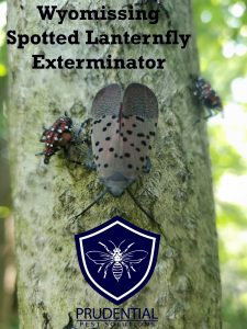 wyomissing spotted lanternfly exterminators