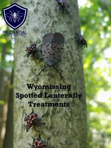 wyomissing spotted lanternfly treatments
