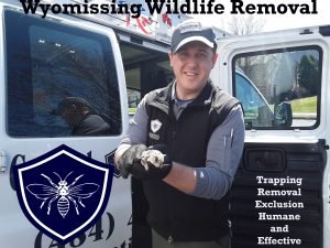 wyomissing wildlife removal and trapping