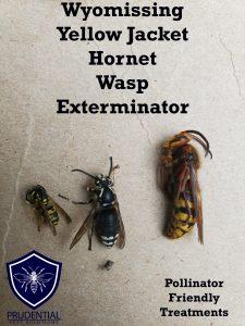 wyomissing yellow jacket hornet wasp exterminator