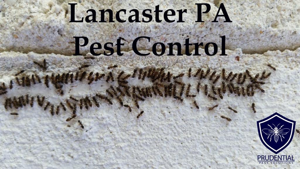 Lancaster PA Pest Control
