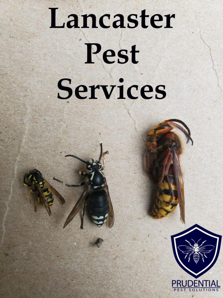 Lancaster Pest Services
