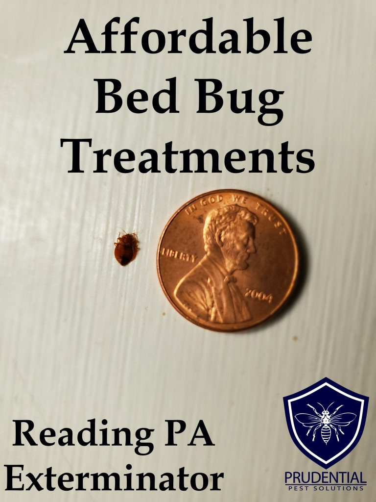 Affordable Bed Bug Treatments