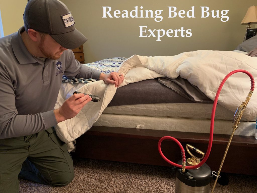 Reading Bed Bug Experts