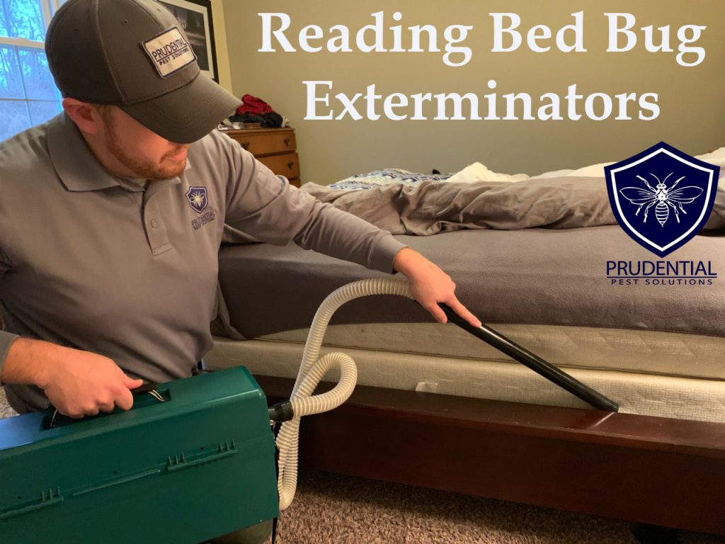 Reading Bed Bug Exterminators