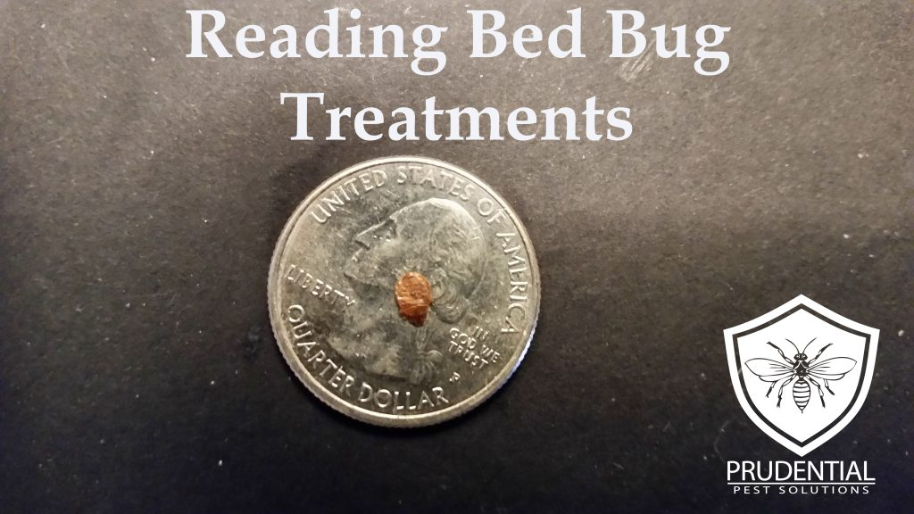 Reading Bed Bug Treatments