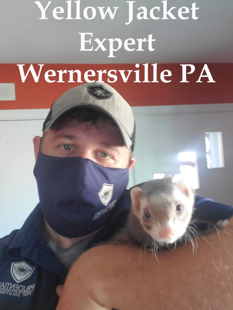 yellow jacket expert in Wernersville PA