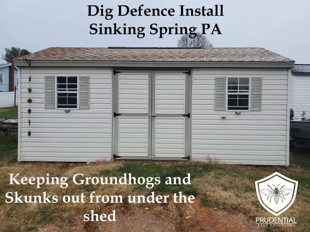 Installing Dig Defence under shed in Sinking Spring PA