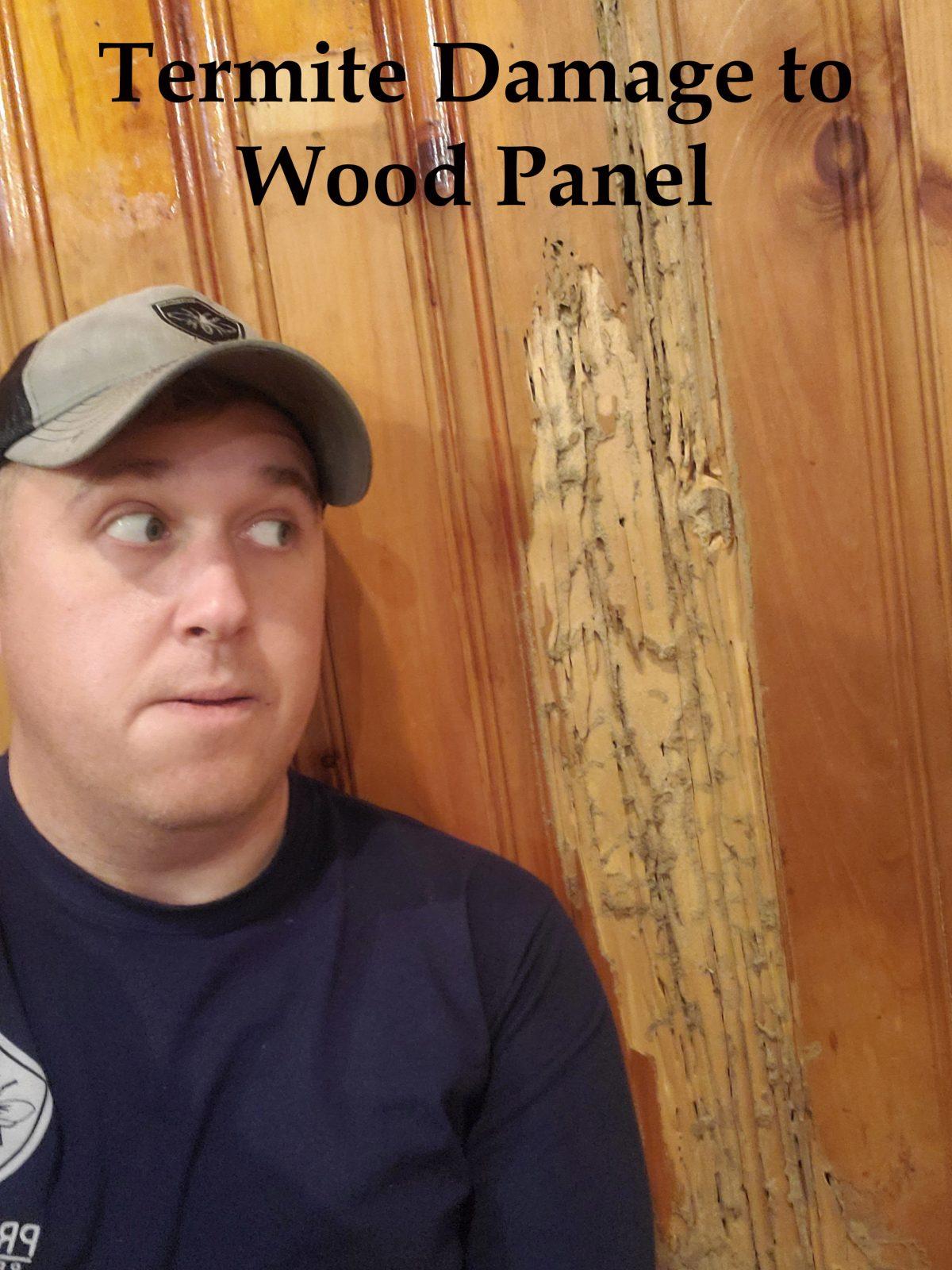 termite damage to wood paneling